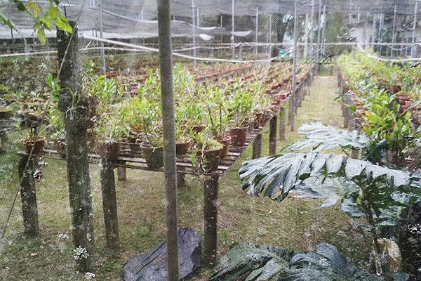 Parque Ecológico, Orquidário Dr. Paulino Recch